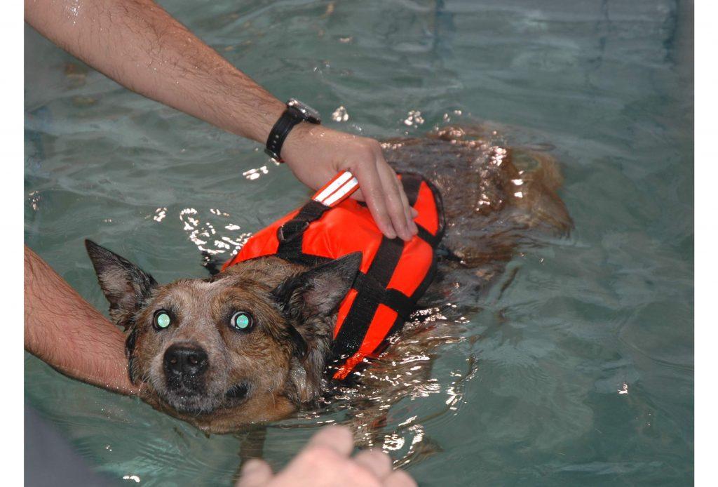 Hydroterapia2